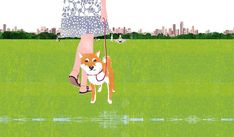 Tatsuro Kiuchi : A shibainu in the Central Park