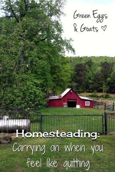 Homesteading: Carrying on when you feel like quitting