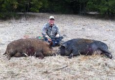 HOGS | 300.00 per hunter to harvest one hog.