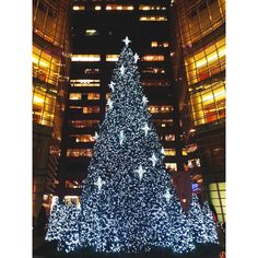 Christmas Lights Keep Shining on ...@ NEW YORK CITY -   --   -  'Never worry about the size of your Christmas tree. In the eyes of children, they are all thirty feet tall.' ― Larry Wilde