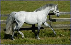 Wouldn't kick this Irish Draught Sport Horse out of my barn - when I get a barn