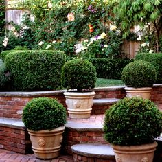 love hardscape - round step carved into the retaining wall. Boxwood Garden, Boxwood Topiary, Garden Urns, Potted Garden, Topiary Garden, Garden Walls, Brick Garden, Topiary Trees, Formal Gardens