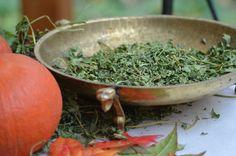 Ocalić przed kompostownikiem – liście selera