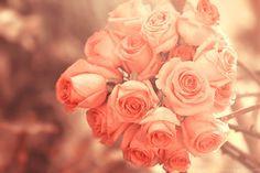 bright roses ... by aoao2