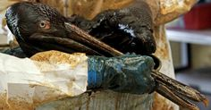 Oil spills are actually good for birds, fish, and the economy according to the oil industry