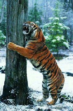 Seths tigress furry manga luscious