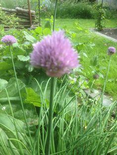 Fine blomster i purløgene