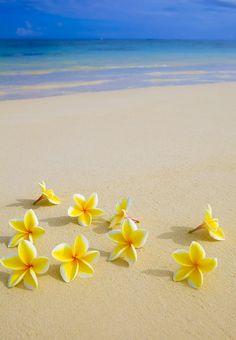 Plumeria beach