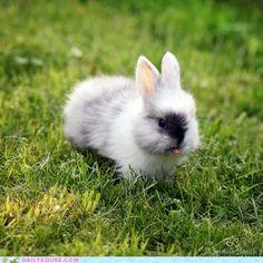 bunny tongue!
