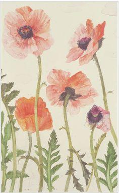 poppy- Elizabeth Blackadder Tea Towel