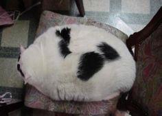 I am not cushion