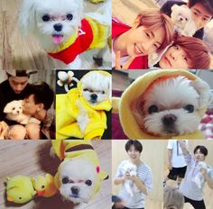 NOW LET'S FOLLOW THAT UP WITH THIS COLLAGE OF COCO AND THE BOYS.   Can You Get Through This Got7 Post Without Fangirling?