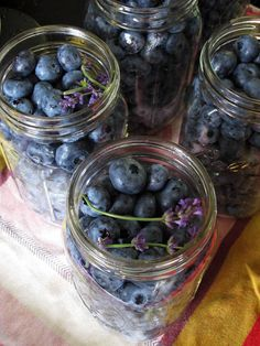 Canning blueberries tutorial with lavender and vanilla beans.
