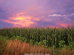 nebraska - Google Search
