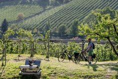 Tipps für die Steiermark I 1000things - wir inspirieren Vineyard, Camping, Mountains, Nature, Travel, Outdoor, Bike Rides, Things To Do, Vacation