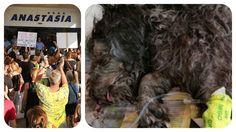 Επαρχιακό Δικαστήριο Αμμοχώτου: Αθώοι διευθυντής και ο υπάλληλος του Αναστασία Hotel για την υπόθεση του σκύλου Μπίλυ
