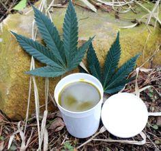 Konopná mast - postup výroby | Lóže u Zeleného Slunce Korn, Cannabis, Weed, Gardening, Tableware, Syrup, Dinnerware, Garten, Tablewares