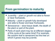 From germination to maturity  Juvenility – plant or growth not able to flower or bear fruitseeds.  Maturity – plant or g...
