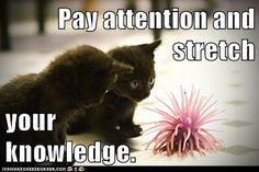 Growth Mindset Cats: English: Pay attention and stretch your knowledge.
