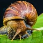 Free Stock Images Animals - Close Up - Escargot - Invertebrate - Macro Photography - Molluscs - Organism - Schnecken - Snail - Snails And Slugs - Terrestrial Animal - Slugs In Garden, Snails In Garden, Animals And Pets, Cute Animals, Sea Snail, Stop Animal Cruelty, Animal Facts, Wild Nature, Belleza Natural