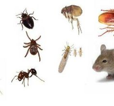 7 Simple Remedies That Make Your Home Insect-Free Without Harmful Chemicals