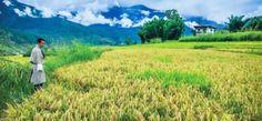 Lonely Planet Italia: le migliori guide per i tuoi viaggi