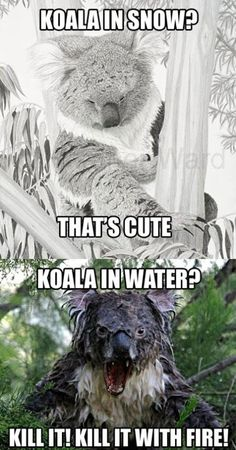 Koalas, i could NOT stop laughing.