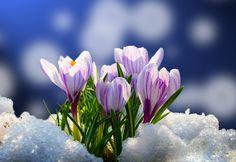 Zima już oficjalnie i pogodowo za nami więc czas zabrać się za wiosenne porządki! Sprawdźcie co i jak należy wykonać w ogrodzie. Zajrzyjcie na nasz blog: http://www.grasslandfarms.pl/wiosenne-porzadki-czas-zaczac-2/
