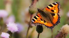 La mariposa divina ( Día Universal del Niño 20 de noviembre del 2016)