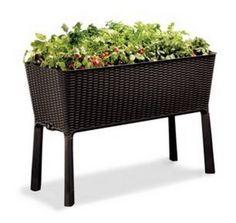 56 Best In The Garden Images Gardening Growing Plants