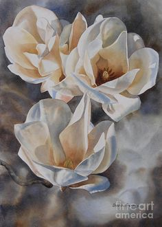 Three White Magnolias Painting by Sharon Freeman - Three White Magnolias Fine Art Prints and Posters for Sale
