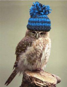 Winter Hat~ ♛