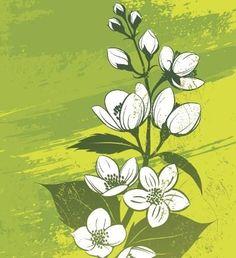 Jasmine flower tattoo1