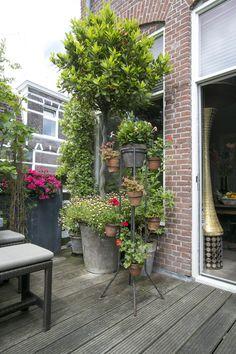 Eclectisch wonen bij Pien in Haarlem Beeld © Elisah Jacobs/InteriorJunkie.com Patio Trellis, Geraniums, Container Gardening, Balcony, Sweet Home, Landscape, Interior, Outdoor Decor, Plants