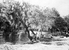 Crystal Springs near Zephyrhills Florida ca 1946