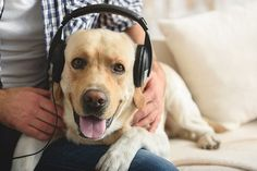 Music has the power to bring us joy, but the music we listen to has been designed for human ears. Here's how to discover music pets like, too!