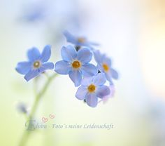 ♥ Forget Me Not Cottage ♥