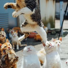 猫さんが踏み台にされちゃった!それを見た周りの猫は…
