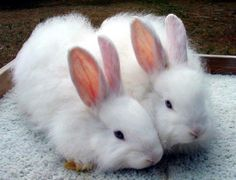 Slippers? No... Beautiful bunnies ♥♥♥ (01/25/14)