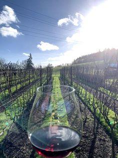 Willamette Valley, Oregon, Vineyard, Hotels, Wine, Vine Yard, Vineyard Vines