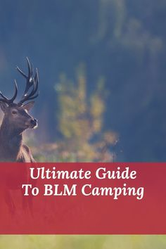 Diy Camping, Camping Hacks, Wilderness First Aid, First Aid Classes, Satellite Phone, Making Water, Bureau Of Land Management, Tent Campers, Camping Supplies