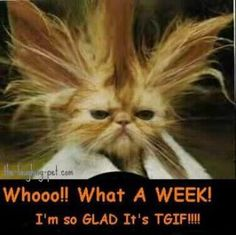 TGIF.  WooHoo. That was Friday ! Whoopee !  And, just think we get to do it again, hooray!
