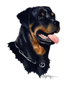 pitbull watercolor painting | ROTTWEILER Dog Watercolor Painting ART Print Signed by Artist DJ ...