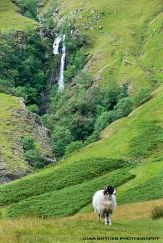 Cautley Spout: A waterfall in the Howgills, Sedbergh, Cumbria, England