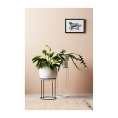 Evergreen Collective - Lotus Pot Stand (Medium) - Modern Homewares Buy Your Pots & Planters Online or In Store! Rubbish Removal, Hanging Pots, Frame Display, Outdoor Areas, Evergreen, Indoor Plants, House Plants, Lotus, Home Furniture