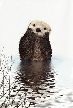 Makes me smile :-) #animals #otter #nature
