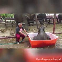 Want To Enjoy Bath. Your Dear Elephant. Want To Enjoy Bath. Your Dear Elephant. Cute Funny Animals, Cute Baby Animals, Animals And Pets, Wild Animals, Cute Animal Videos, Funny Animal Pictures, Cute Pictures, Elephant Love, Elephant Bath