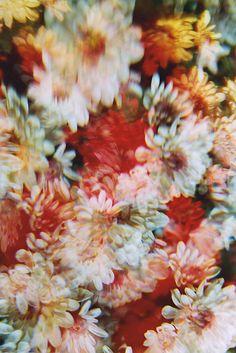 :: blurry flowers ::