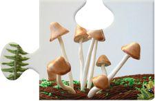 Edible Wild Sugar Mushrooms by Andie's Specialty Sweets