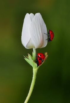 Lady bug lady bug fly away, land on me, good luck you'll bring! Flora Und Fauna, Beautiful Bugs, Bugs And Insects, Macro Photography, Photography Flowers, Belle Photo, Beautiful Creatures, Mother Nature, Flower Power